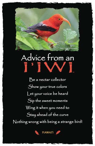 Advice from an I'iwi- Hawai'i- Frameable Art Postcard