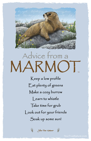 Advice from a Marmot Frameable Art Postcard