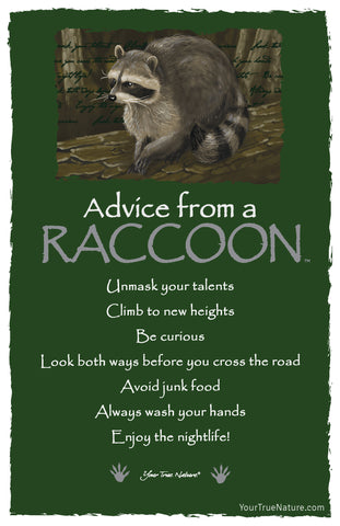 Advice from a Raccoon Frameable Art Postcard
