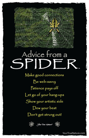 Advice from a Spider Frameable Art Postcard