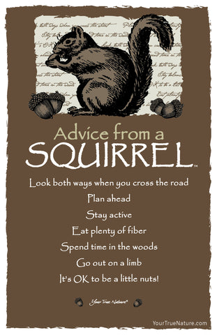 Advice from a Squirrel Frameable Art Card
