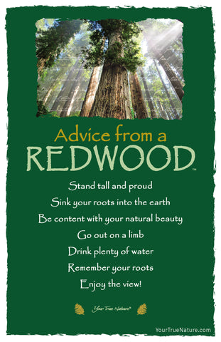 Advice from a Redwood Frameable Art Postcard