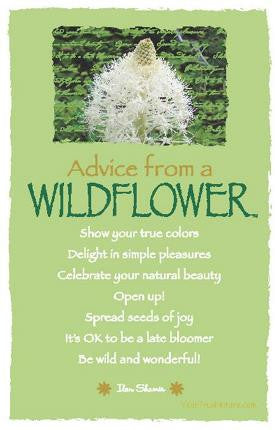 Advice from a Wildflower - Glacier National Park - Frameable Art Postcard