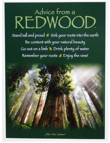 Advice from a Redwood Frameable Art Poster 9x12