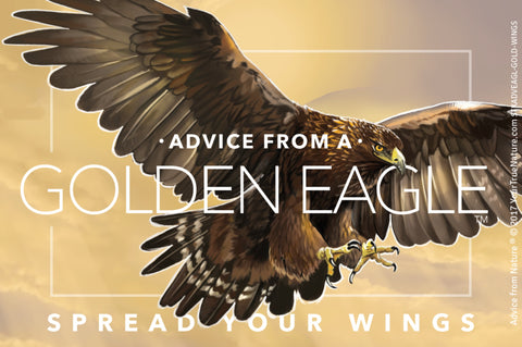 Advice from a Golden Eagle - Designer Sticker
