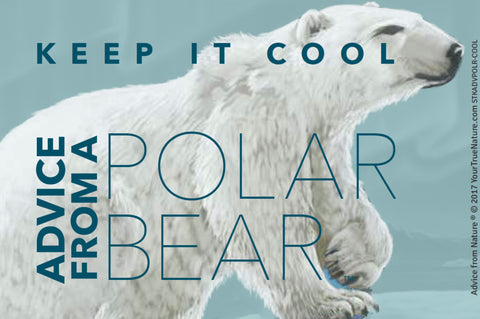 Advice from a Polar Bear - Designer Sticker
