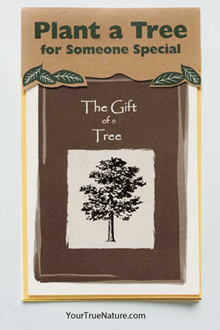 All Occasion Grove Tree Planting Card