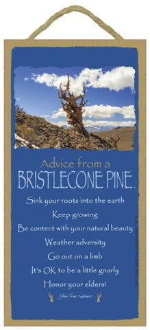 Advice from a Bristlecone Pine Hanging Wood Sign