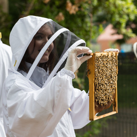 Hiver urban beekeeping and beer tasting experience