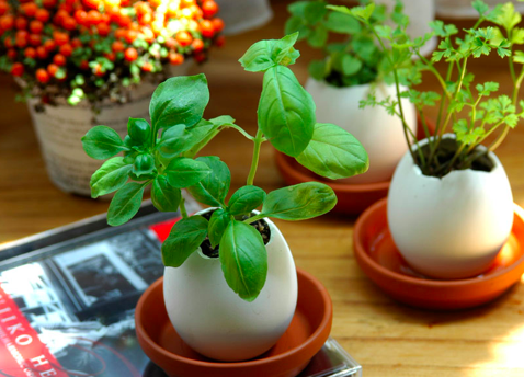 Eggling Hatchable Plants