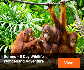 Travelbay Borneo Tours - 8 Day Wildlife Wonderland Adventure
