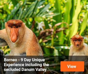 Travelbay Borneo - 9 Day Borneo Experience including Danum Valley