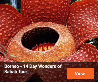 Travelbay Borneo – 14 Day Wonders of Sabah Tour