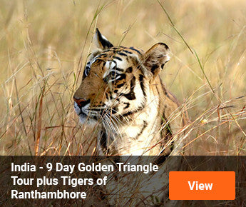 Travelbay India - 9 Day Golden Triangle plus Tigers of Ranthambhore