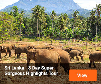 Travelbay Sri Lanka Tours - 8 Day Super Gorgeous Highlights Tour
