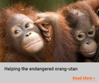 Travelbay-Blog---Helping-the-endangered-orang-utan