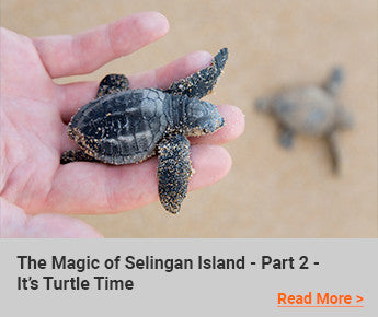 Travelbay-Blog-The-Magic-of-Selingan-Island-Part-2