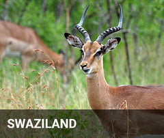 Travelbay Africa Tailor Made Tours - Swaziland