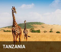 Travelbay Africa Tailor Made Tours - Tanzania