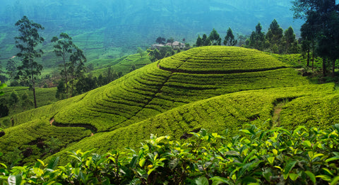 Travelbay Blog - Sri Lanka Tours - Sri Lanka, the new travel hot spot - Nuwara Eliya