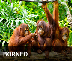 Travelbay Borneo Tailor Made Tours
