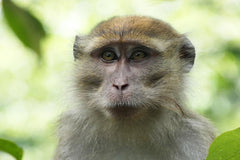 Travelbay Borneo Tours - Customer Review - Kinabatangan River Safari - Macaque