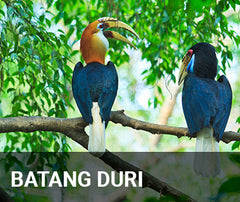 Travelbay Brunei Tailor Made Tours - Batang Duri - Bird wildlife
