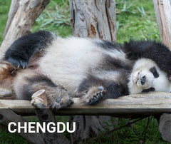 Travelbay China Tailor Made Tours - Chengdu - panda