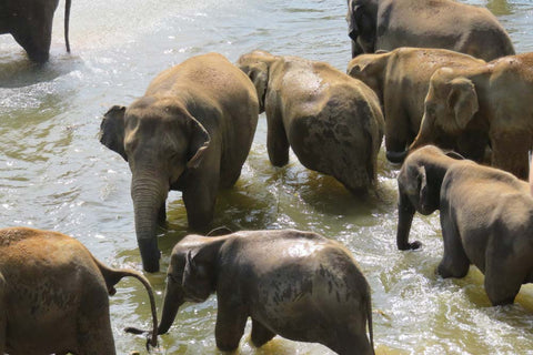 Travelbay Customer Reviews - Catherine Hingston - Elephants at Pinnawala