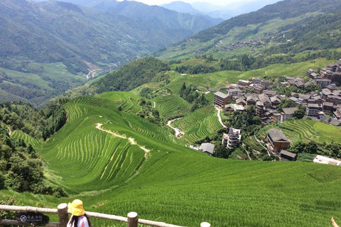 Travelbay Customer Reviews - Ray & Rose Schmidt in China - Longsheng Rice Fields