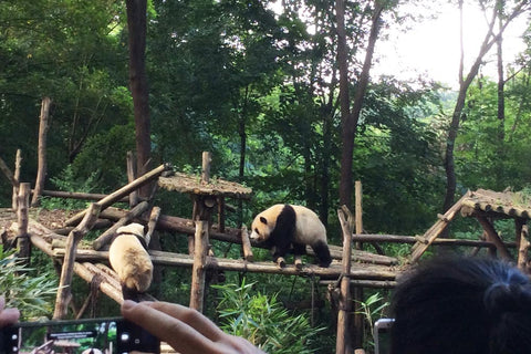 Travelbay Customer Reviews - Ray & Rose Schmidt in China - Pandas, Chengdu