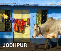 Travelbay India Tailor Made Tours - Jodhpur - cow outside home