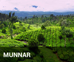 Travelbay India Tailor Made Tours - Munnar - rolling hills