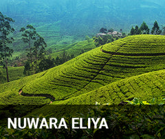Travelbay Sri Lanka Tailor Made Tours - Nuwara Eliya - rolling hills