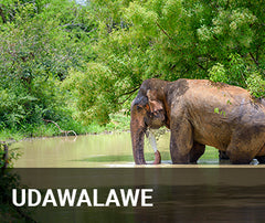 Travelbay Sri Lanka Tailor Made Tours - Udawalawe