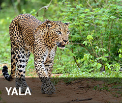 Travelbay Sri Lanka Tailor Made Tours - Yala