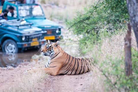 Travelbay Tours - Tigers of Ranthabhore