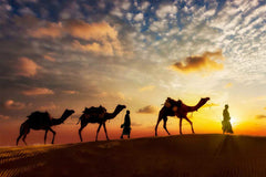 Travelbay India 15 Day Rajasthan Tour - Camels in Jaisalmer
