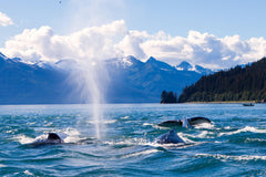 Travelbay Alaska and Canada 16 Day Dream Holiday - Whales in Juneau, Alaska