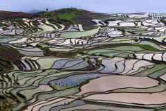 Travelbay China Tours - 7 Days of Complete Wow in the Yunnan Province - Private Tour - China Private Tours - Rice Fields Yunnan