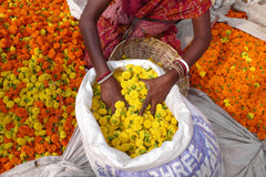 Travelbay India Tours - 12 Days from Golden North to Irresistible South - India Small Group Tours - Flower Market, India