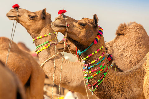 India – 9 Day Holiday including Pushkar Camel Fair & Golden Triangle Private Tour