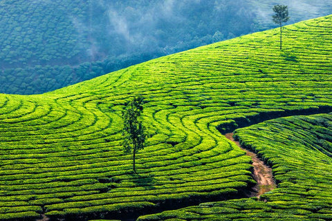 India - Paradise Found - 12 Day Kerala Private Tour
