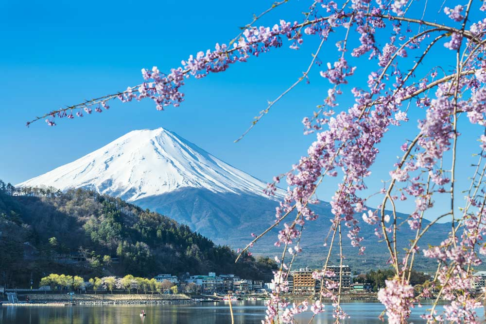 Travelbay Japan Tours - 8 Day Highlights of Japan - Japan Private Tours - Cherry Blossom and Mt. Fuji