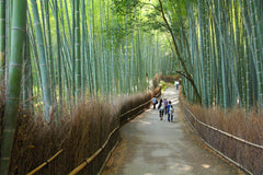 Travelbay Japan Tours - Japan Private Tours - Kyoto bamboo grove