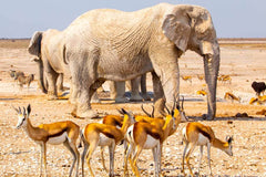 Travelbay Southern Africa Tours - Namibia - 10 Day Highlights of Namibia Private Tour - Elephants and Impalas, Etosha National Park