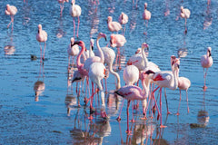 Travelbay Southern Africa Tours - Namibia - 10 Day Highlights of Namibia Private Tour - Flamingos at Walvis Bay, Skeleton Coast