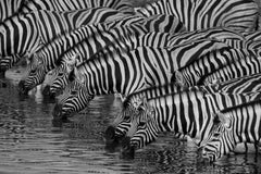 Travelbay Southern Africa Tours - Namibia - 10 Day Highlights of Namibia Private Tour - Zebras, Etosha National Park