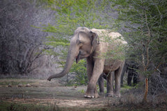 Travelbay Sri Lanka Tours - The Wonders if Sri Lanka in 14 Days - Sri Lanka Private Tours - Elephant, Yala National Park