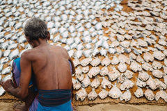 Travelbay Sri Lanka Tours - The Wonders if Sri Lanka in 14 Days - Sri Lanka Private Tours - Fish Market, Sri Lanka